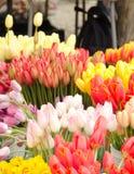 Tulips season at Redmond farmer market Royalty Free Stock Photo