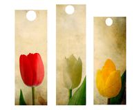 Tulips set Stock Images