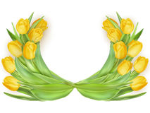 Tulips in shape of heart. EPS 10 royalty free illustration