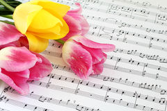 Tulips on the Sheet Music. Pink and yellow tulips lying on the sheet music Stock Photography