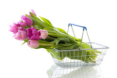 Tulips in shopping basket. On white royalty free stock image