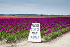 Tulips and sign Stock Photo
