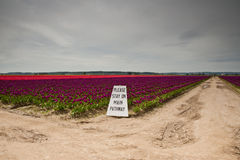 Tulips and sign Stock Photos