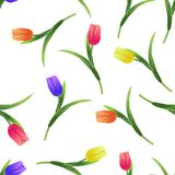 Tulips simless pattern4-01. Beautiful spring seamless pattern with Yellow,red,purple tulips.The flowers on a white background.Vector illustration.Print for gift Royalty Free Stock Photos