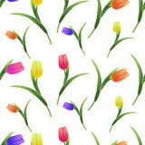 Tulips simless pattern5-01. Beautiful spring seamless pattern with Yellow,red,purple tulips.The flowers on a white background.Vector illustration.Print for gift Royalty Free Stock Photos