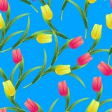 Tulips simless pattern2-01. Beautiful spring seamless pattern with Yellow, red tulips.The flowers on a blue background.Vector illustration.Print for gift Stock Photography