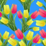 Tulips simless pattern 01-01. Beautiful spring seamless pattern with Yellow, red tulips.The flowers on a blue background.Vector illustration.Print for gift Stock Images