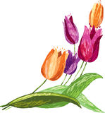 Tulips sketch Royalty Free Stock Images