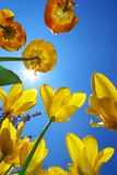 Tulips in sky Royalty Free Stock Images