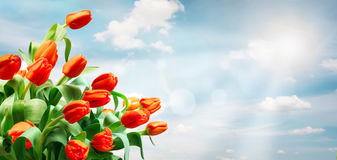 Tulips on sky background. Spring And Easter Banner Royalty Free Stock Image