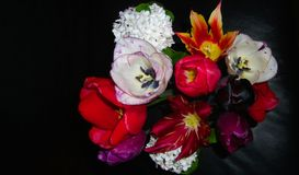 SPRING BOUQUET WITH LEATHER BACKGROUND. Tulips and Snowball blooms in an arrangement with a black background Stock Photos