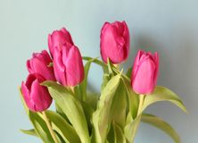Tulips. Some purple tulips with blue background Royalty Free Stock Photos