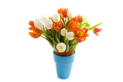 Tulips of spring stock image