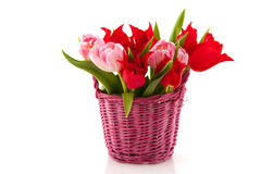 Tulips in spring Royalty Free Stock Images