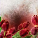Tulips spring border design Royalty Free Stock Image