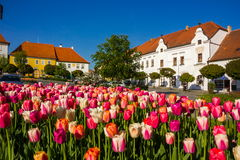 Tulips in spring field. Colorful tulips in spring town stock photography