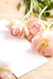 Tulips. spring flowers with blank card for text Royalty Free Stock Image