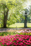 Tulips in spring park Royalty Free Stock Photography