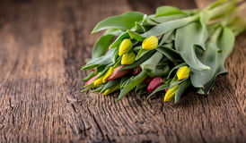 Tulips. Spring tulips loose on the oak table Stock Images