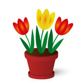 Tulips. Spring yellow and red tulips in red pot Stock Illustration