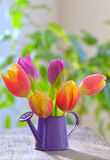 Tulips in sprinkler garden Stock Photo