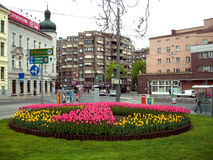 Tulips in square, Vienna, Austria Royalty Free Stock Photos