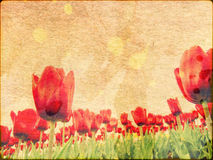 Tulips on Stained Paper Stock Images