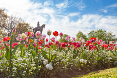 Tulips with Statue Stock Photography