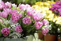 Tulips in a street flower market. Close up of some pink tulips in bloom in a street flower market Royalty Free Stock Photo