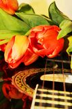 Tulips on the strings of a guitar. Beautiful tulips on the strings of a guitar, evoking love and music Royalty Free Stock Photos