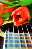 Tulips and strings, symbols. Beautiful tulips on the strings of a guitar, suggesting loneliness and desire for love Stock Images