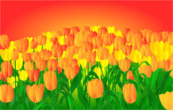 Tulips and sunset vector Royalty Free Stock Photos
