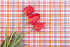 Tulips on the tablecloth. Stock Photo