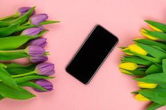 Tulips and tablet with white mockup screen on pink background. Greeting card for Easter or Women`s Day royalty free stock photography