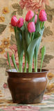 Tulips on Tapestry Royalty Free Stock Photos