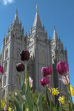 Tulips and Temple Stock Photos