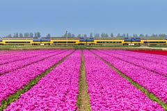 Tulips train symetrie Royalty Free Stock Photos