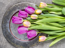 Tulips on a tray. As holiday background Stock Photography