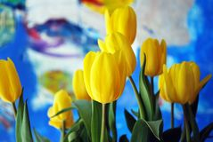Tulips. The tulip is a Eurasian and North African genus of perennial, bulbous plants in the lily family. It is an herbaceous herb with showy flowers, of which royalty free stock image