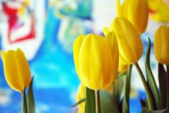 Tulips. The tulip is a Eurasian and North African genus of perennial, bulbous plants in the lily family. It is an herbaceous herb with showy flowers, of which stock photography