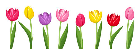Tulips of various colors. Stock Photos