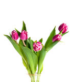 Tulips in vase. Five tulips in glass vase Royalty Free Stock Photo