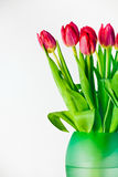 Tulips in vase. Fresh red tulips in a green vase, bright background Stock Images