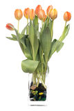 Tulips in a vase Royalty Free Stock Image