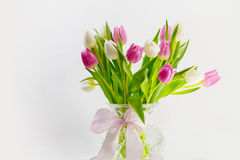 Tulips in a vase. Pink and white tulips in a vase with loop Stock Image