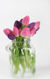 Tulips in a vase Royalty Free Stock Images