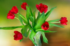 Tulips in vase Stock Photo