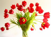 Tulips in a vase. Tulip explosion royalty free stock photo