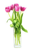 Tulips in a vase. Bunch of pink tulips in a vase against a white background Stock Images