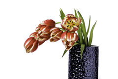 Tulips in a Vase. Droopy Red and Yellow Tulips in a Vase Stock Photo